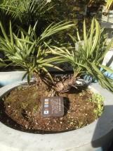 海外の植物