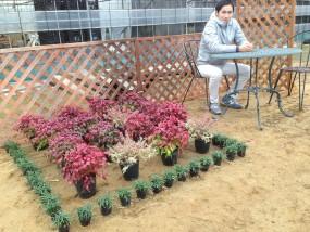 玉竜・お多福南天・アベリアの庭
