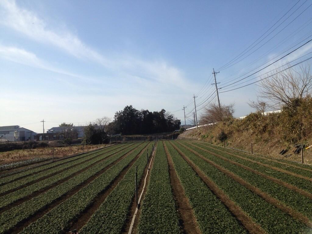 玉竜ちゃん畑