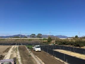 タマリュウ畑